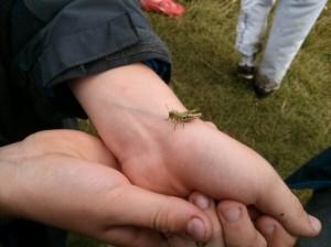 SC_2013_grasshopper