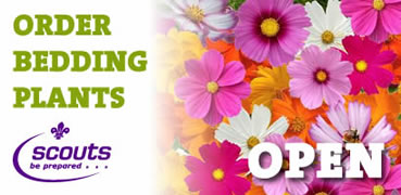 Post image for Bedding Plant Ordering